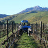 The Organic Focus Vineyard Project